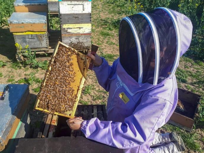 Jolanta with bees
