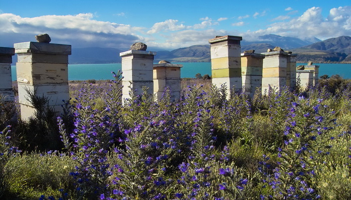 Bee Hives in New Zealand