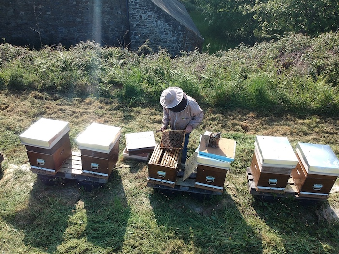 Richard inspecting a hive