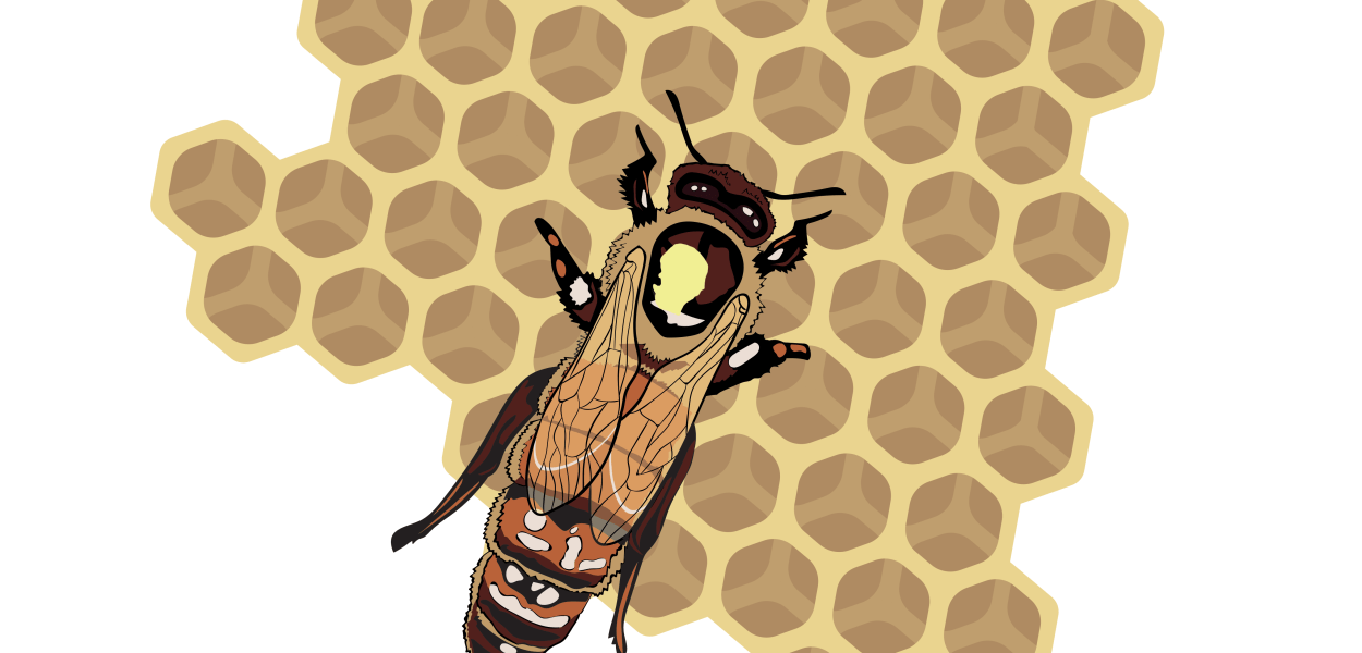 Queen honeybee by @squgcreative
