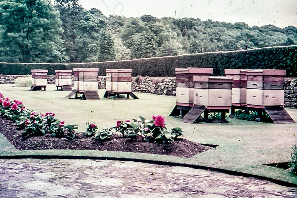 Buckfast Abbey Home Apiary 1960s