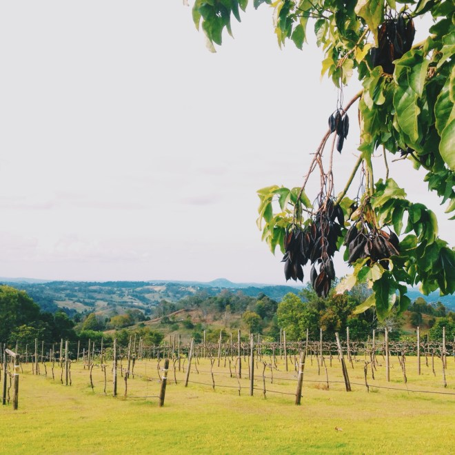 Flame Hill Winery Montville