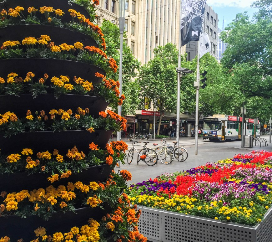 Spring Flowers in Melbourne