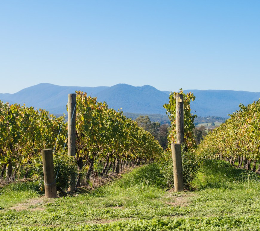 Domaine Chandon Yarra Valley