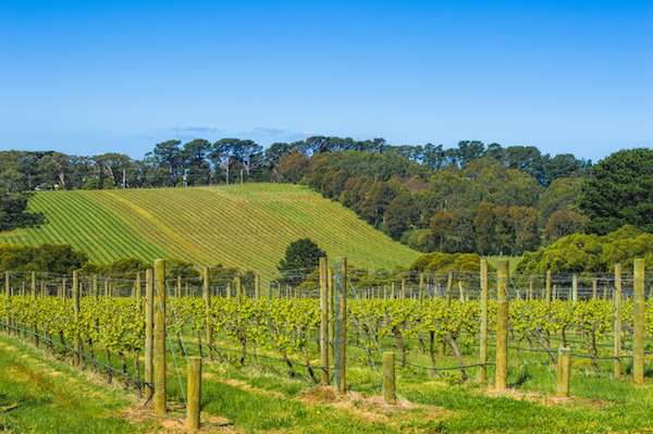 T'Gallant Winery Mornington Peninsula Day Trip from Melbourne