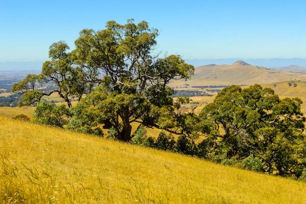 One Tree Hill Ararat The Grampians