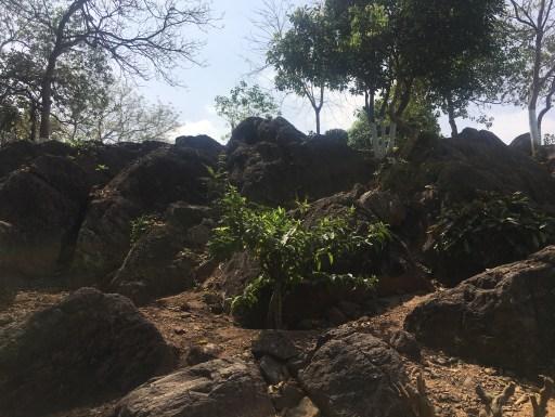 Ashokan Rock Edicts