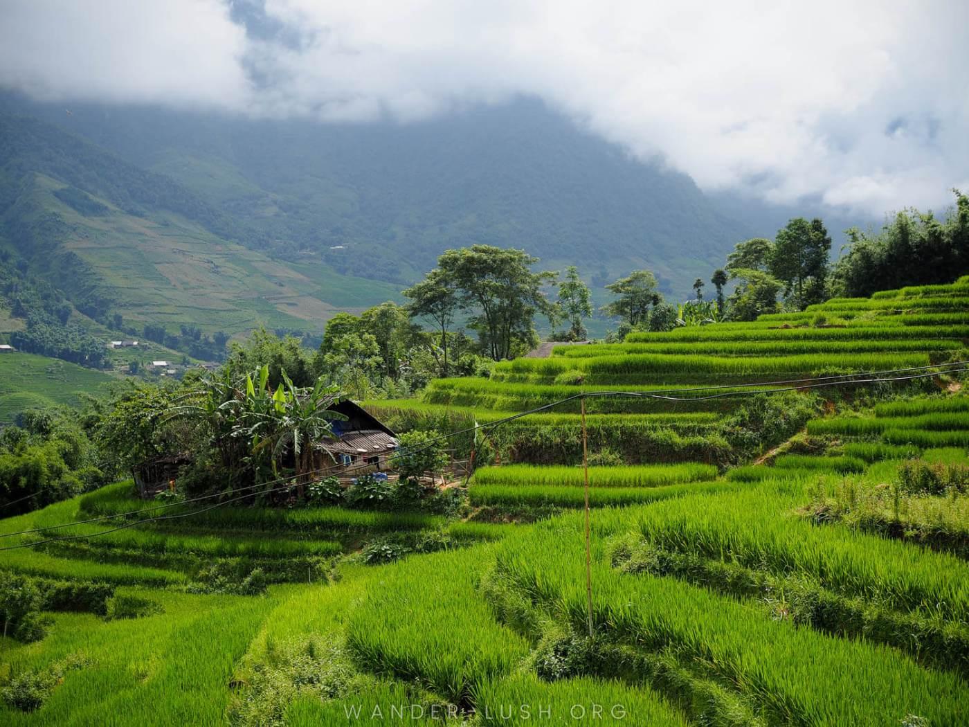 Emily-Lush-Sapa-Vietnam