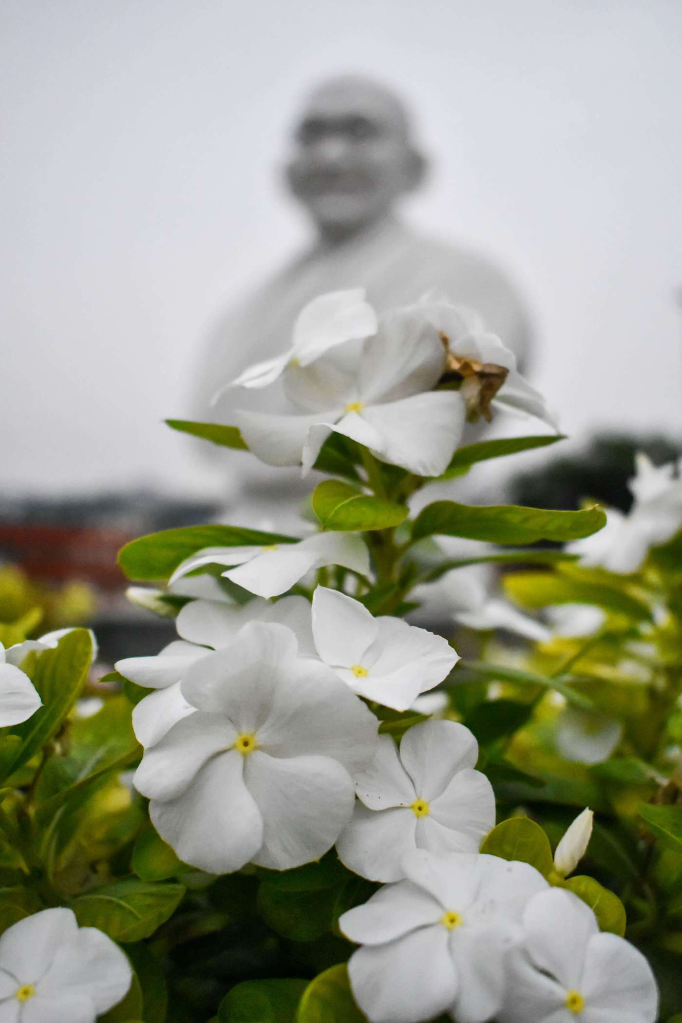 Gandhi Statue with flowers