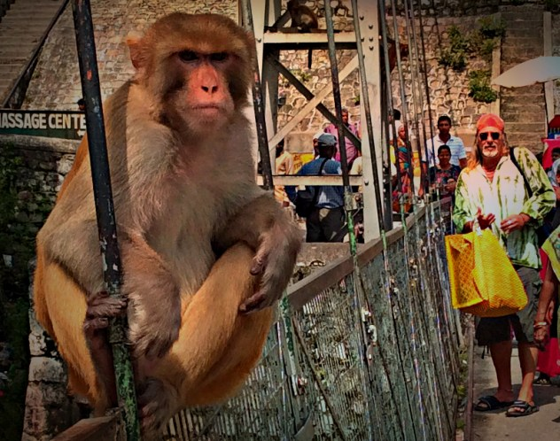 Monkey on bridge