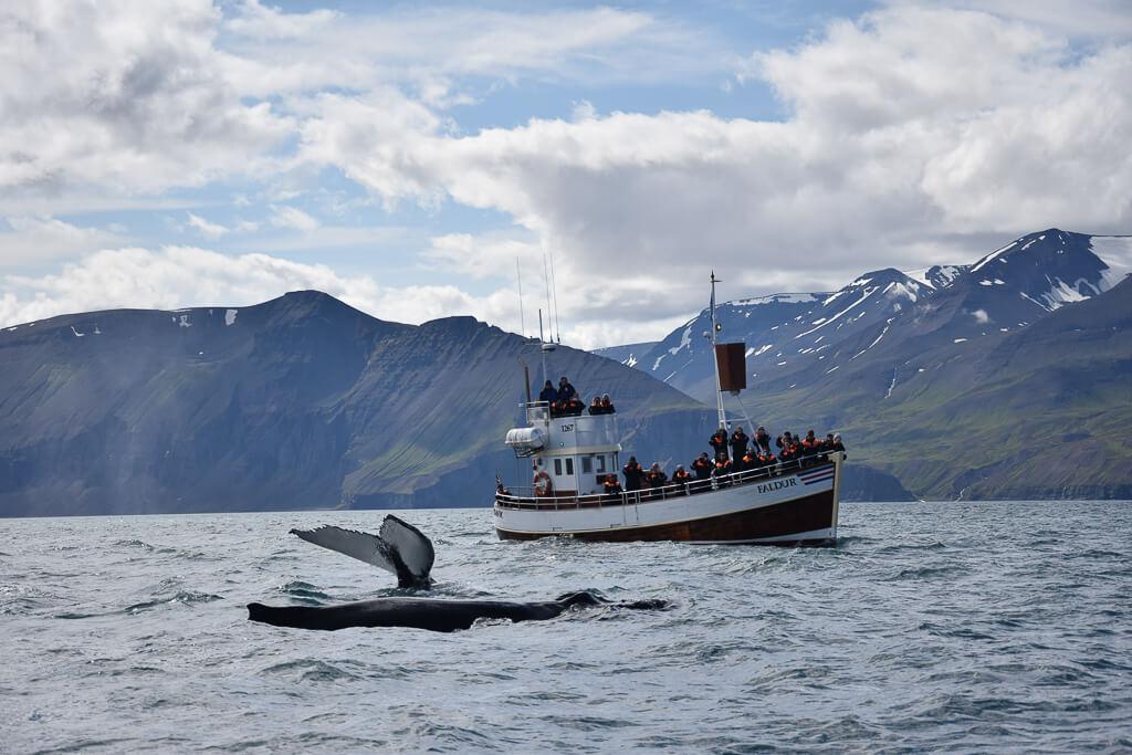 Walvis bij boot in IJsland