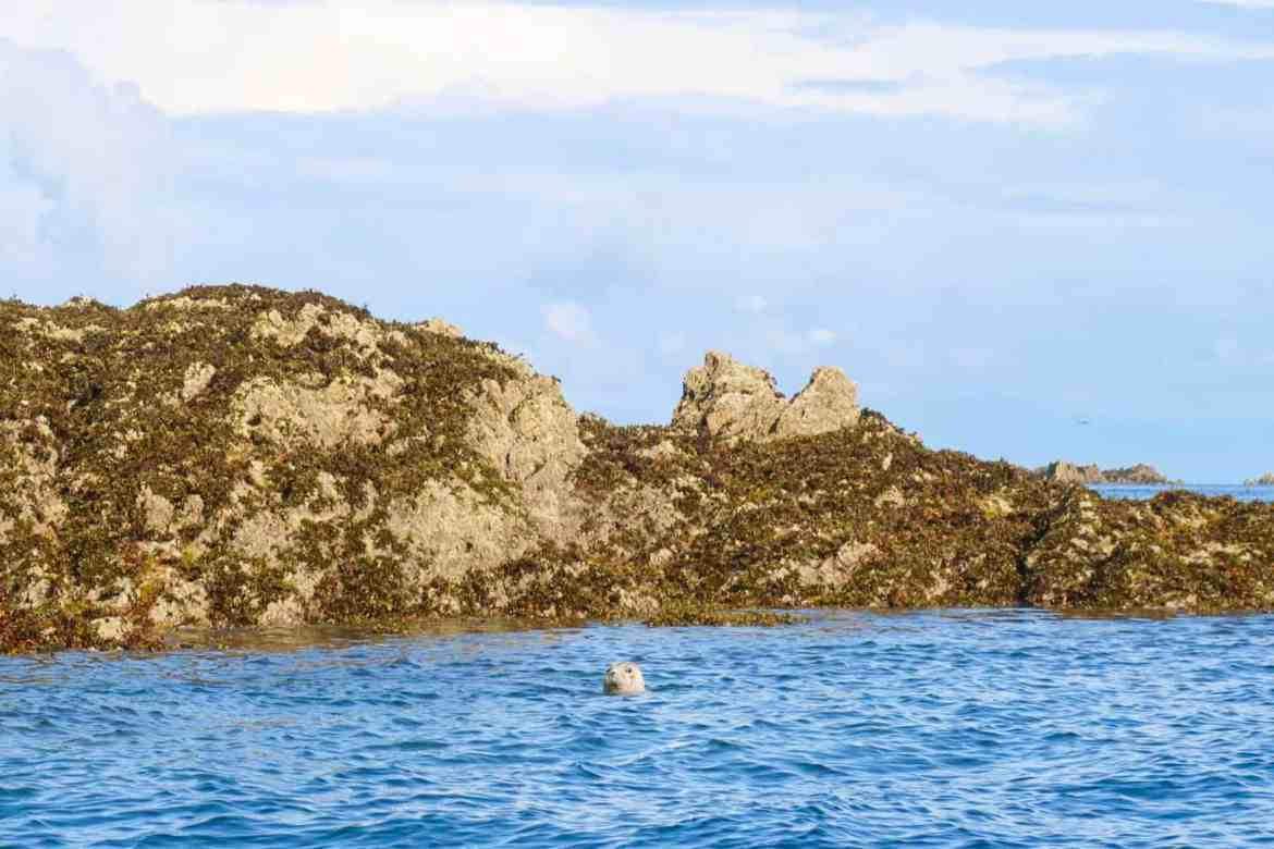 Jersey Channel Island itinerary, boat trip seal