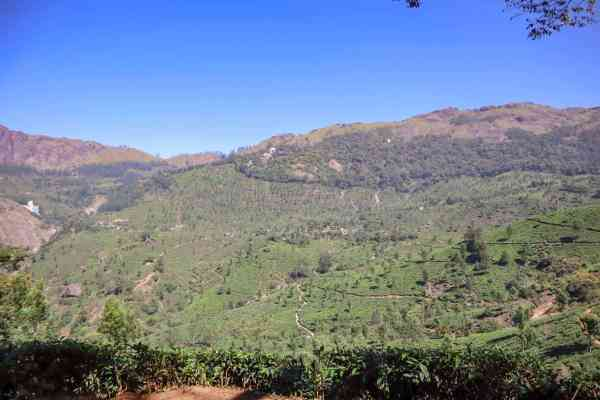 Hiking in Munnar Tea Plantations