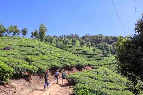 Hiking in Munnar Tea Plantations
