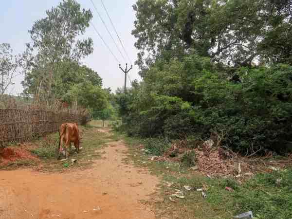 Auroville trash