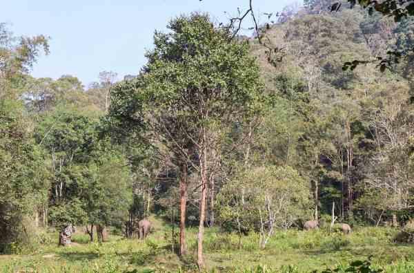 thekkady national park travel guide