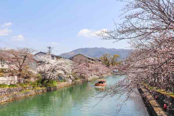 Kyoto day trip itinerary River Cherry Blossom