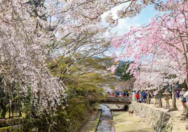 2 week japan itinerary, things to do on miyajima island