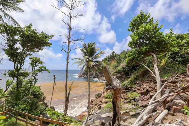 dominica day tours, kalinago territory beach and trees dominica