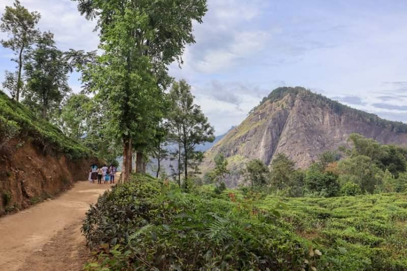 Ella Rock and Tea Plantations in Ella | visiting little adams peak and nine arch bridge in Ella