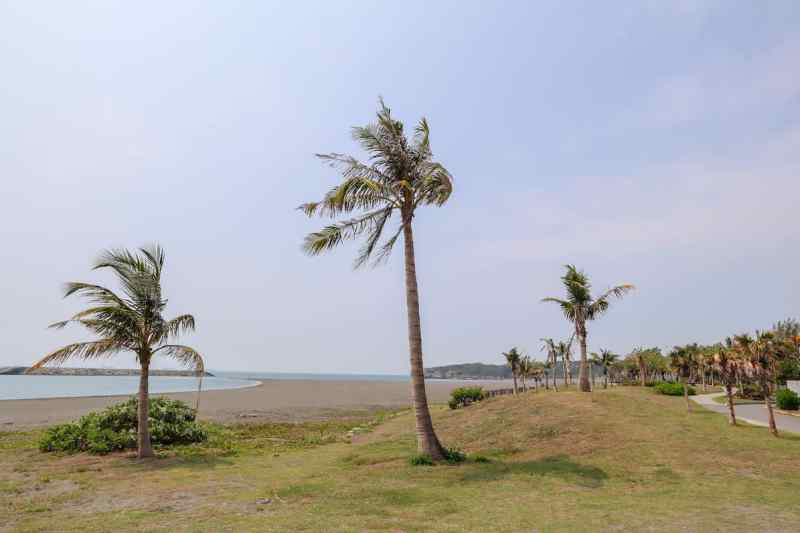Cijin Island Black Beach and Palm Trees