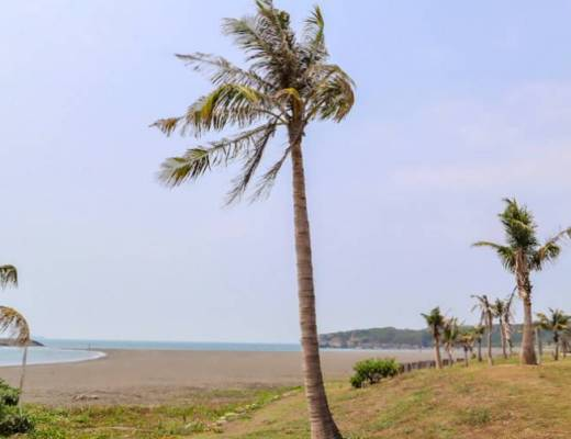 Cijin Island palm trees and beach