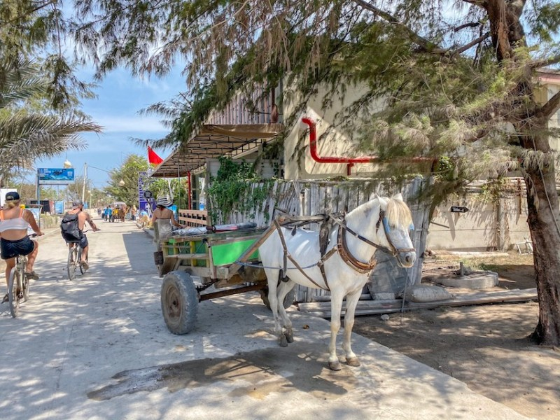 Horse and Carts on Gili T