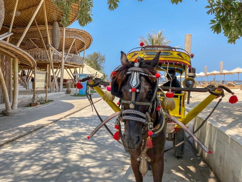 Gili Islands, Horse and Cart Cidomo in Gili T