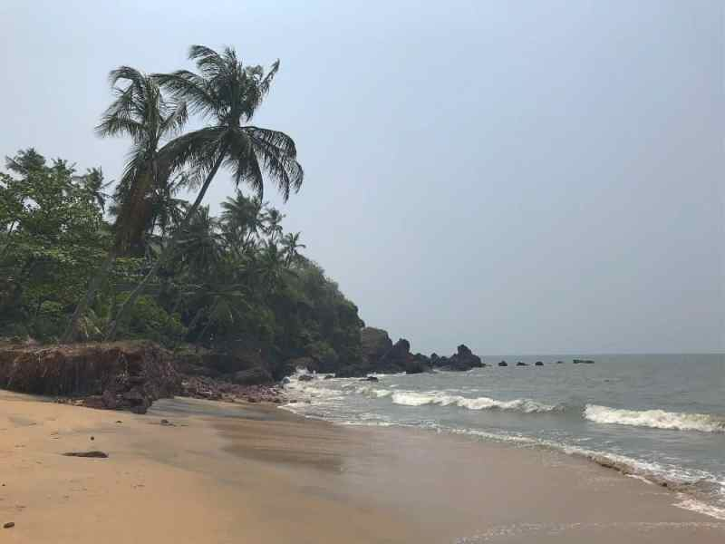 beaches in Goa for foreigners, Morjim Beach
