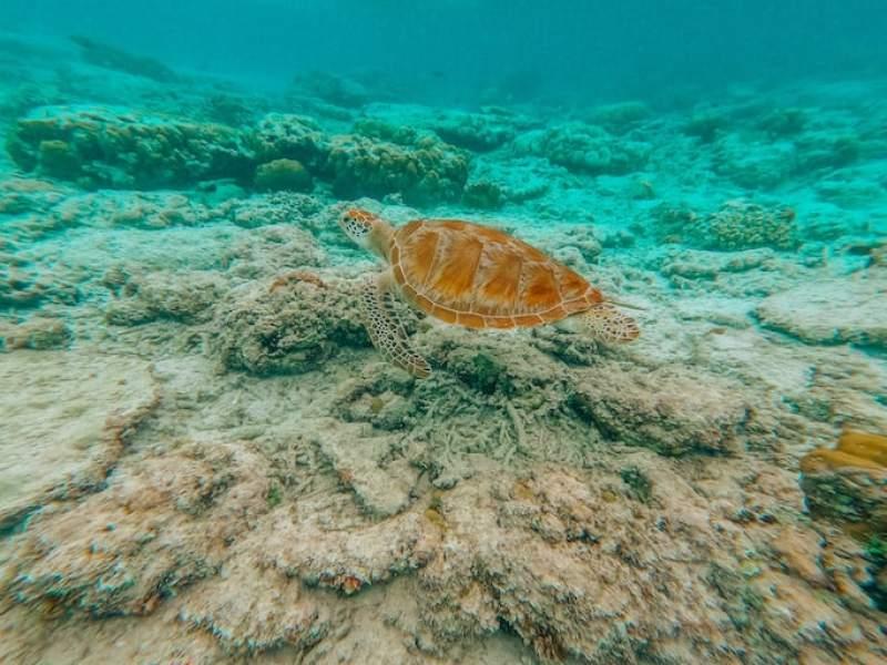 Snorkeling Gili Trawangan, turtle