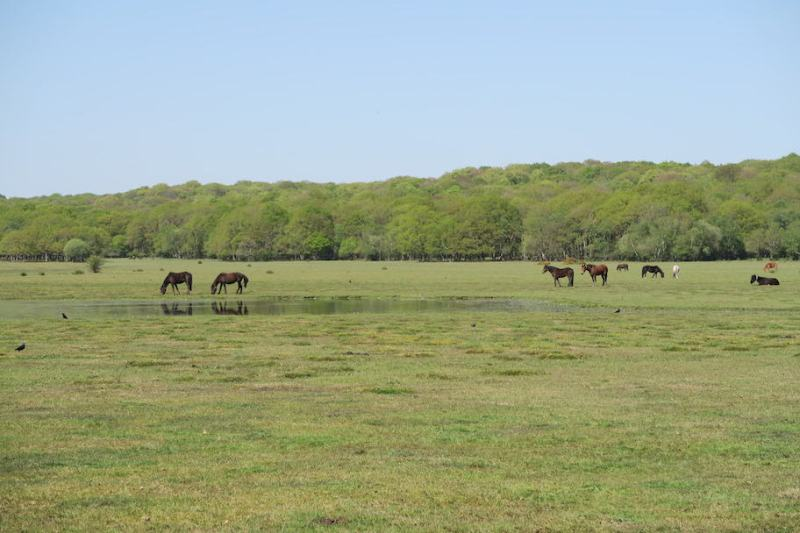 New Forest National Park Field with ponies and blue sky | New Forest day trip from London by train