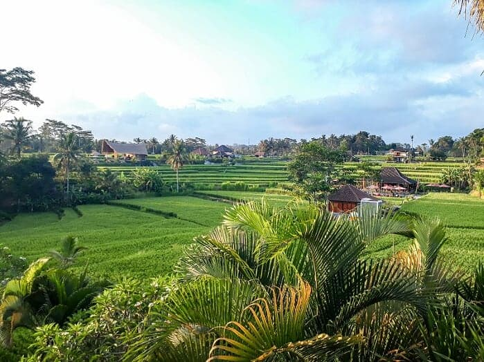 campuhan ridge walk rice fields Ubud | Best Bali Sunset