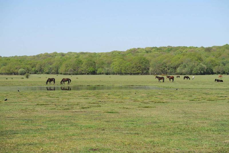 Road Trip from London, New Forest