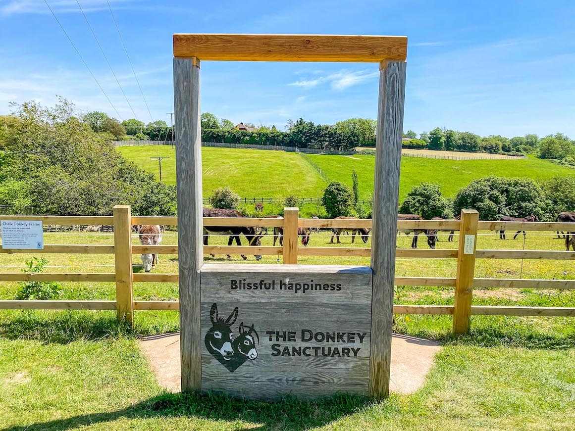 Things to do near Lyme Regis, Sidmouth Donkey Sanctuary