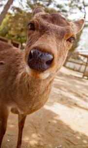 blog-deer-closeup