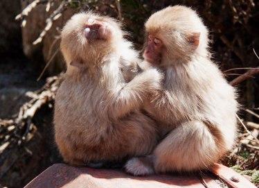 blog-sibling-love