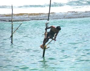 The famous stilt fisherman, Thalpe