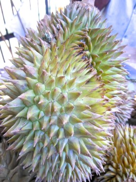3 Double durian