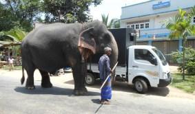 Elephant, Truck, Human