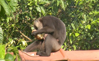 I love how Ma Monkey knows she's so deep in concentration that she's planted her foot on baby's tail to make sure she doesn't sneak away!