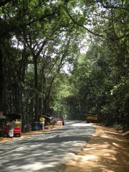 Shadows & Shade Jak Forest Kuranegala