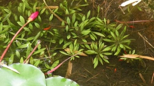 Drowned Flowers