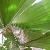 shots around a fan palm 4