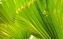 shots around a fan palm 6