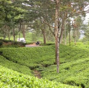 Highway through the tea gardens