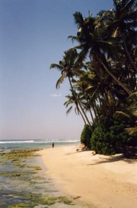 Wandering a beach