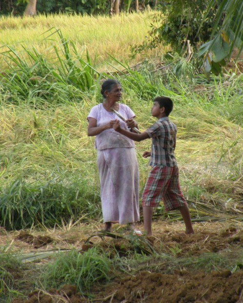 Playtime in the Paddy Fields 5
