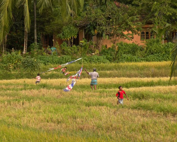 Playtime in the Paddy Fields 6