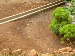 Making a Garden 13
