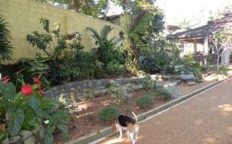 Making a Garden 22